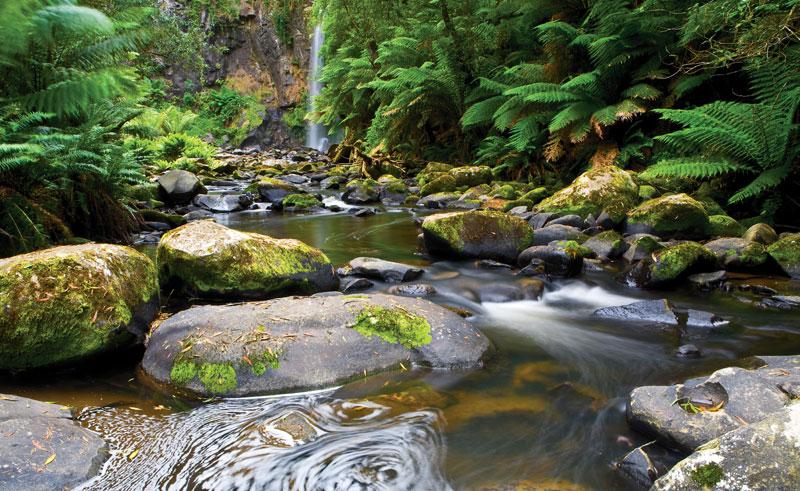 australia victoria great otway national park is