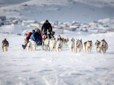 east greenland dog sledding on sea ice tasiilaq vgrnlnd
