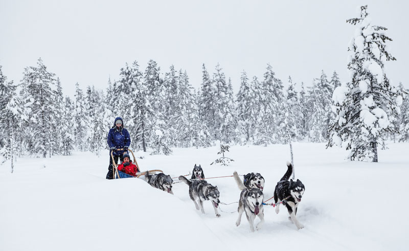 finnish lapland ruka husky sledding