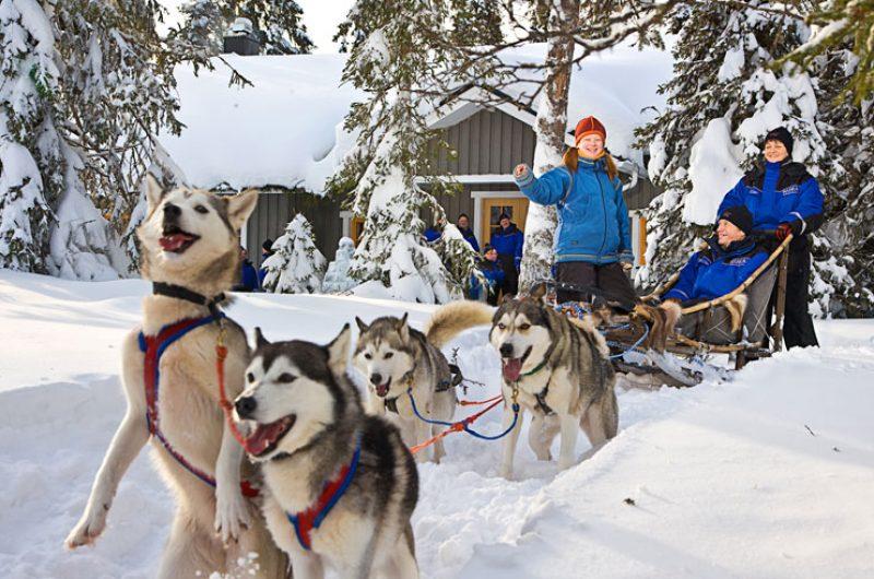 finnish lapland ruka husky team