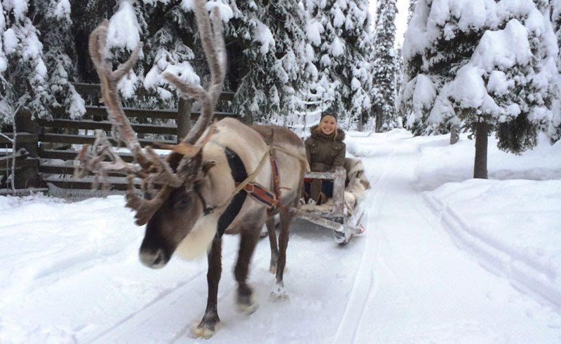 finnish lapland ruka reindeer sledge ride