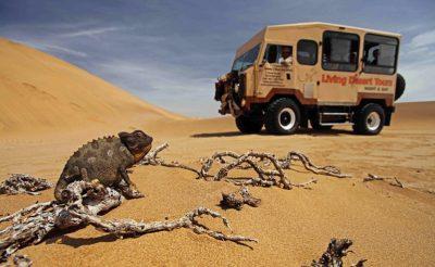 namibia swakopmund living desert tour truck