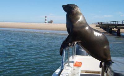 namibia swakopmund marine cruise seal on boat