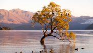 new zealand southern lakes wanaka ducks istk
