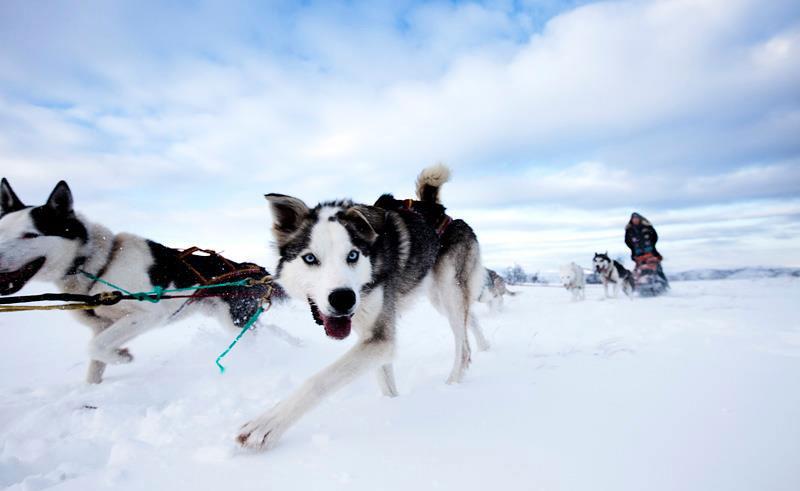 norway malangen dogsledding