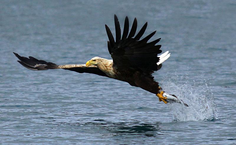 norway sea eagle safari