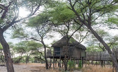 onguma tree top outside
