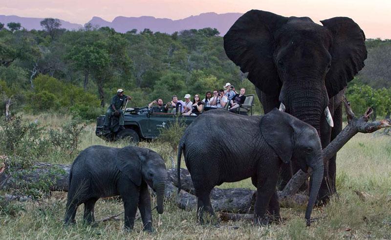 south africa kruger national park safari elephants