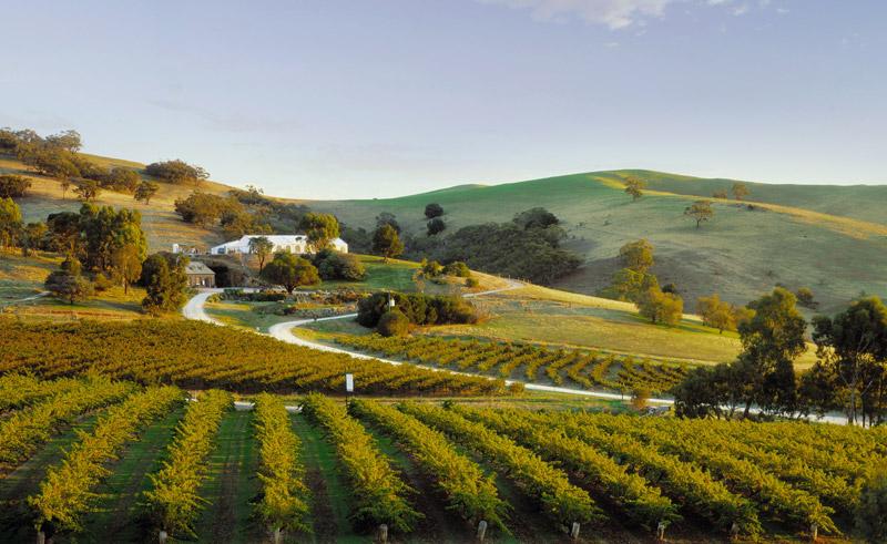 south australia barossa valley vineyard