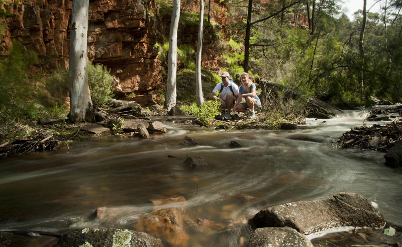 south australia flinders ranges eco safari