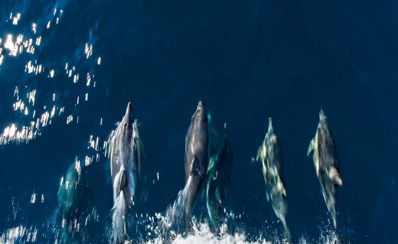 south australia temptation sailing wild dolphins