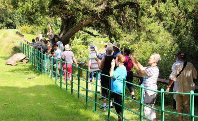 st helena plantation tour tortoise corridor tb