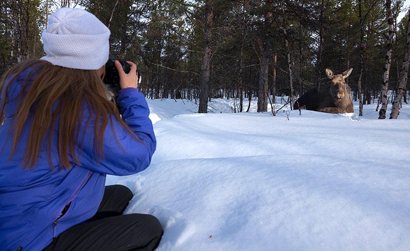 swedish lapland icehotel wildlife photography ih