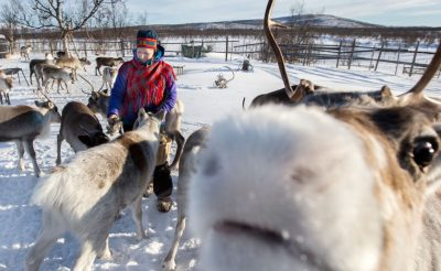 swedish lapland reindeer farm rensjon