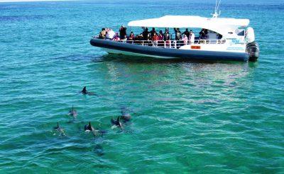 western australia rockingham dolphin watching rwe