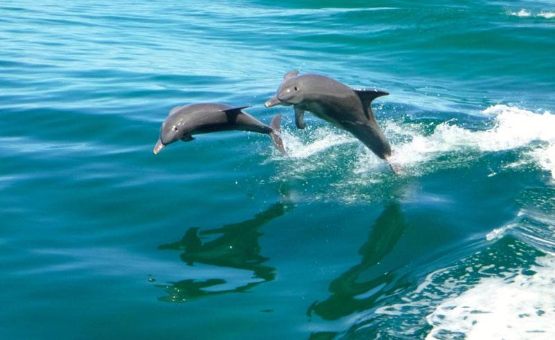western australia rockingham dolphins rwe