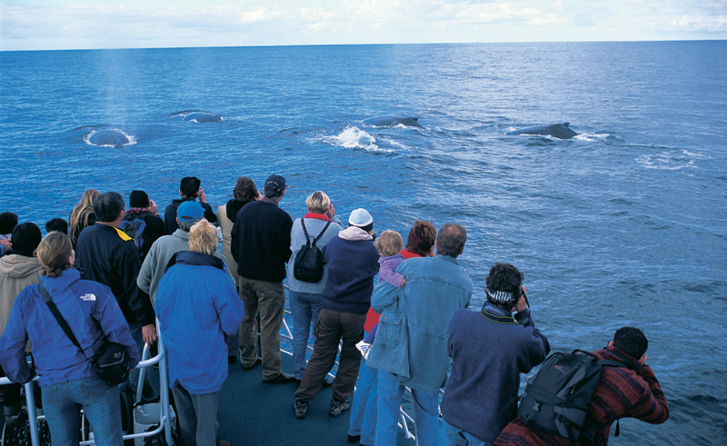 western australia whale from boat augusta