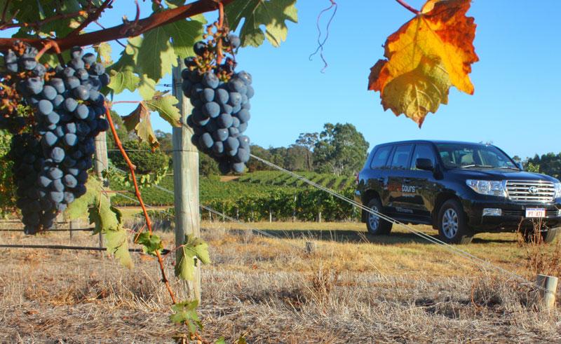western australia wine and dine tour sup