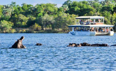 zimbabwe hippo watching cruise wild horizons