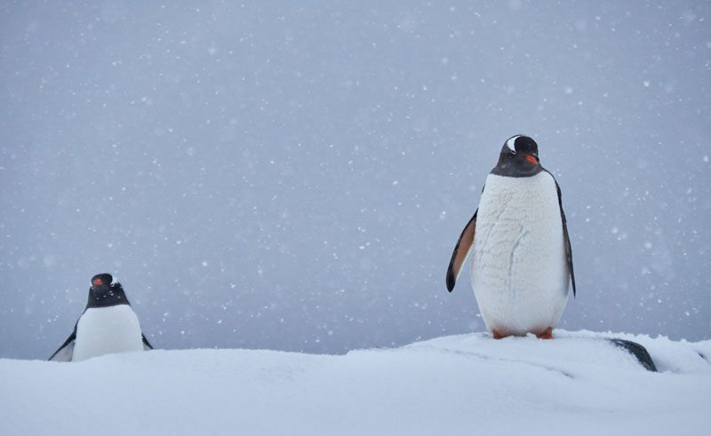 DTW 2041 penguin