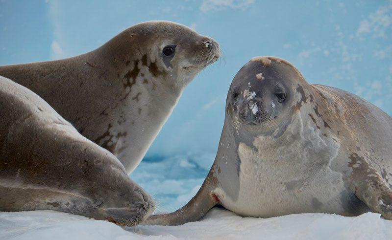 Rob George 2041 seal