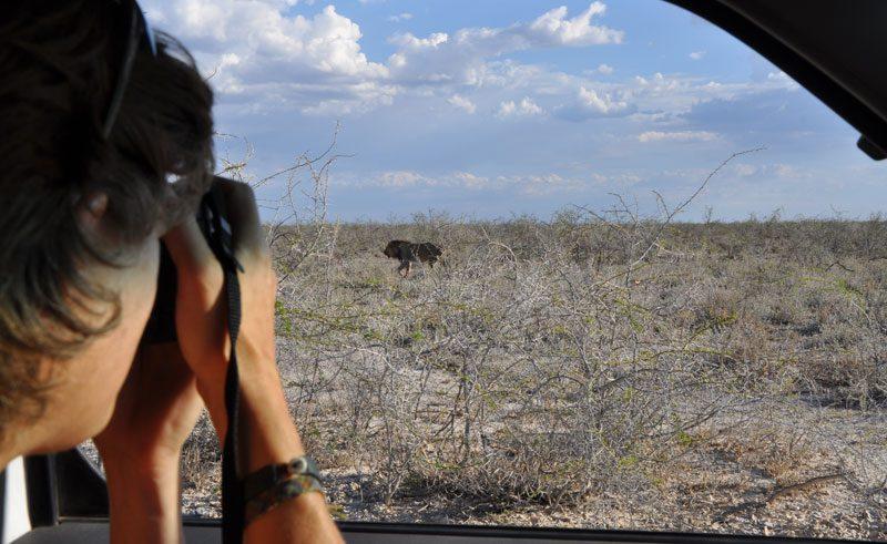 Self Drive at Etosha National Park
