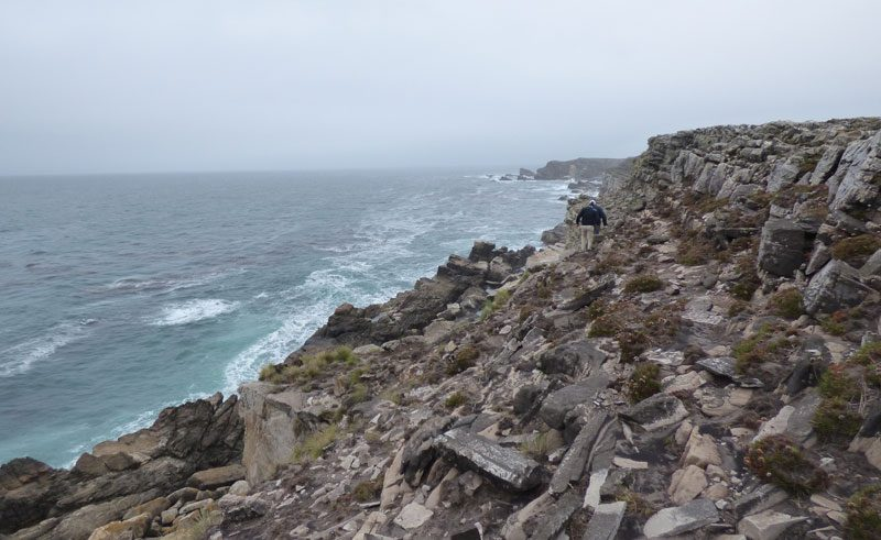 antarctica falklands pebble island coastline