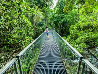 australia queensland bridge in Daintree Rainforest istk