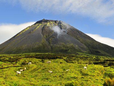 azores mount pico cows grazing