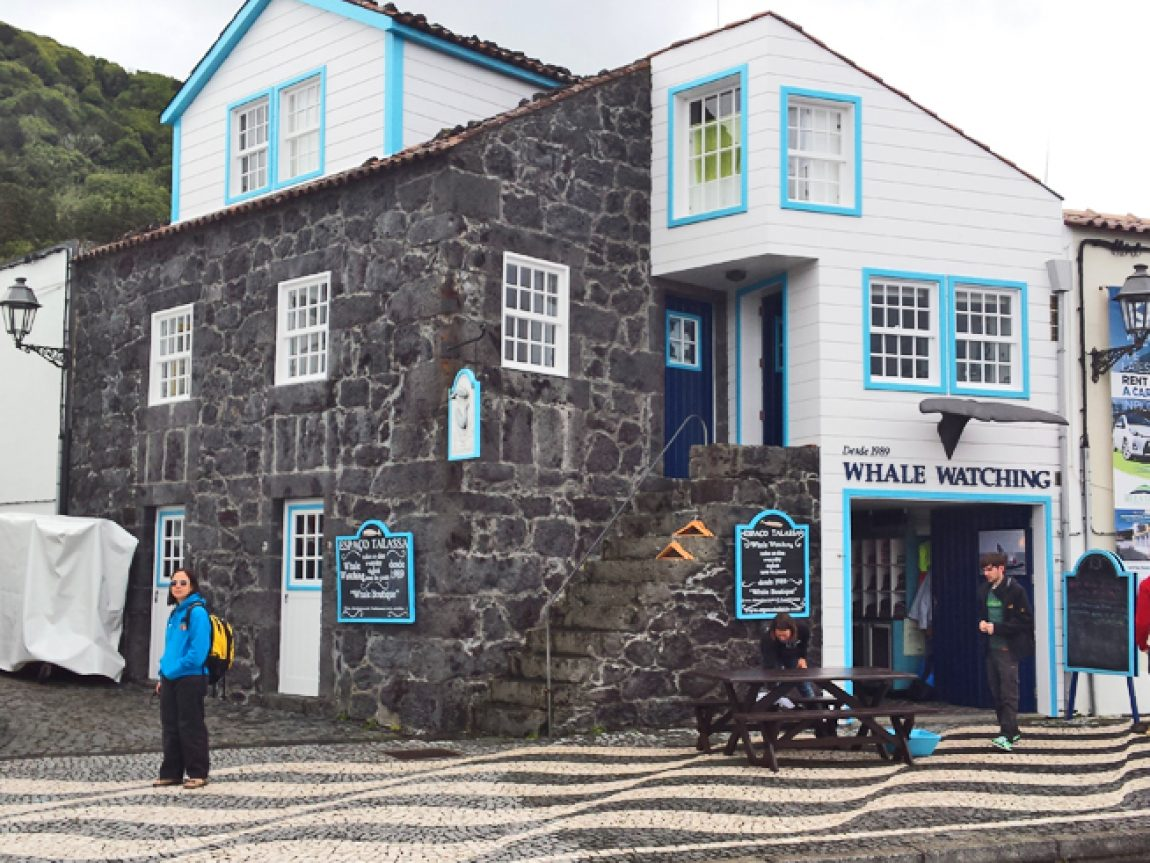 azores whale watching centre