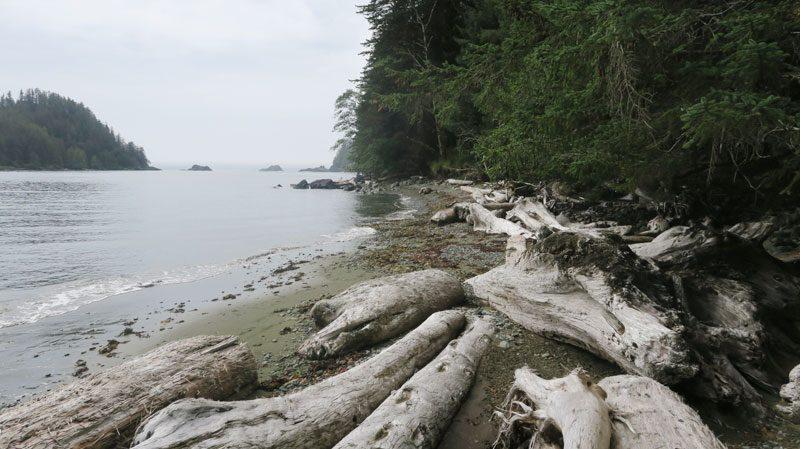 canada haida gwaii beach driftwood