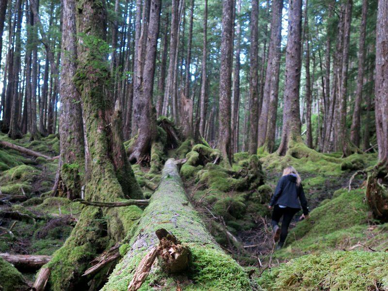 canada haida gwaii forest walk lg