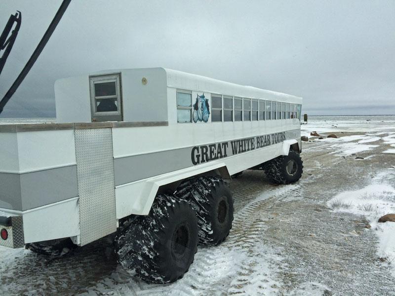 canada erin polarbears 1