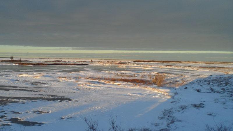 canada erin polarbears12