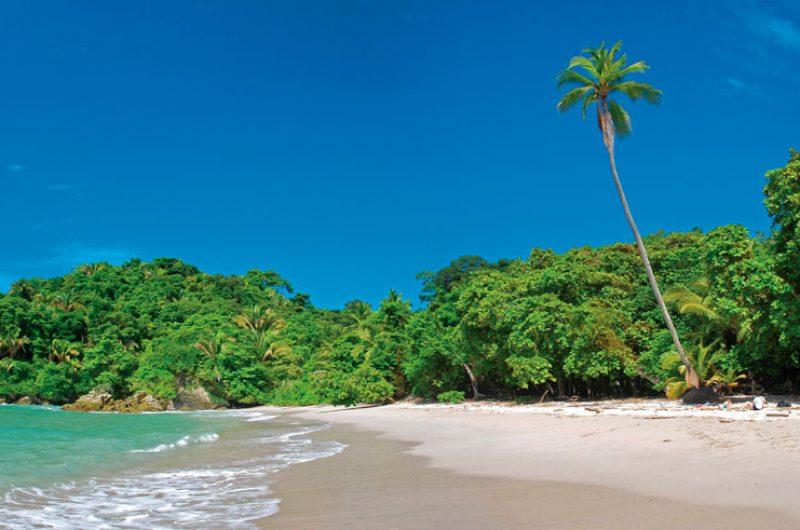 costa rica palm tree beach