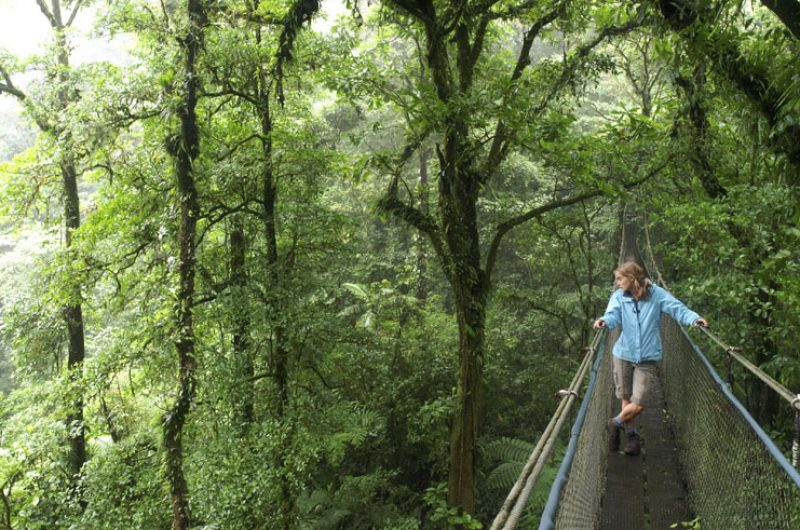 costa rica treetop canopy walk istock