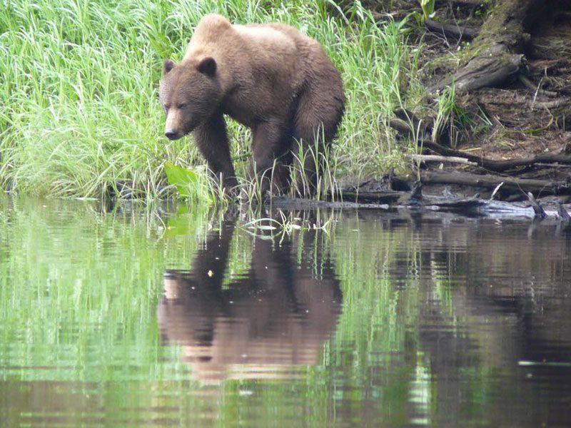 doug greatbearlodge grizzly