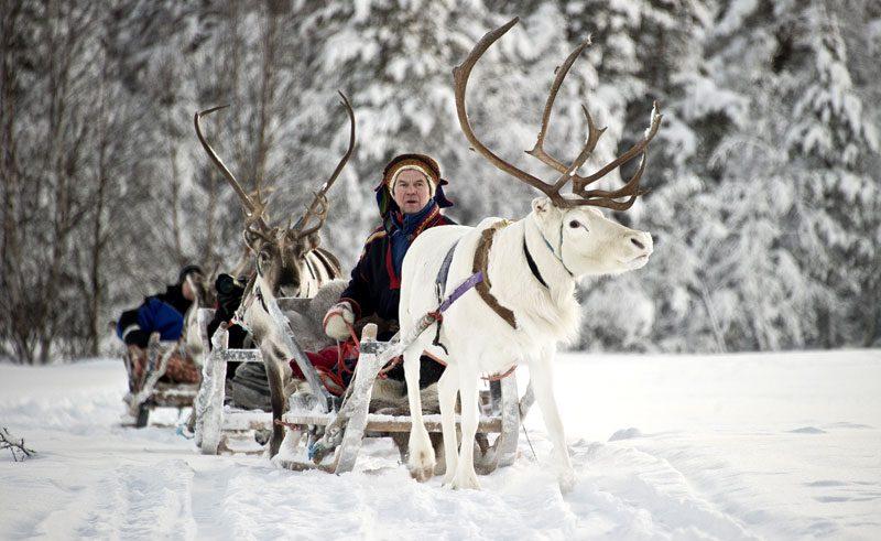 finland lapland kakslauttanen reindeer sledge sami kar