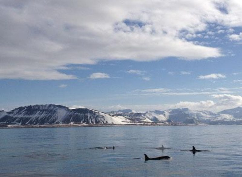 iceland clairesangster whale blog