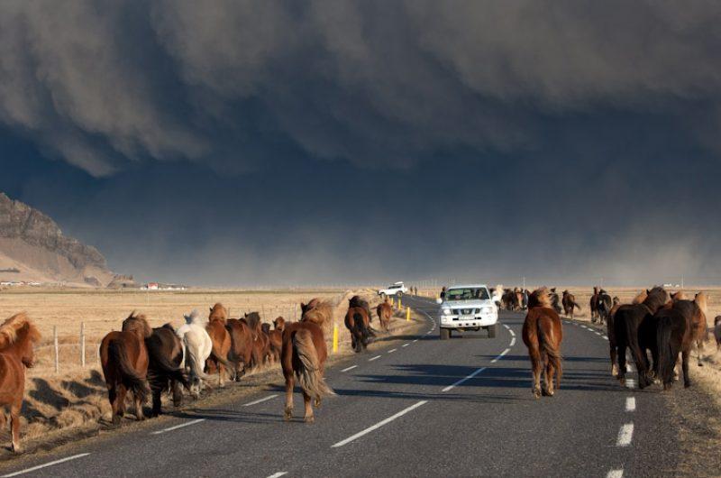 iceland eyjafjallajokull ash cloud horses