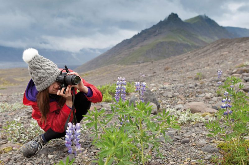 iceland student photographing flora