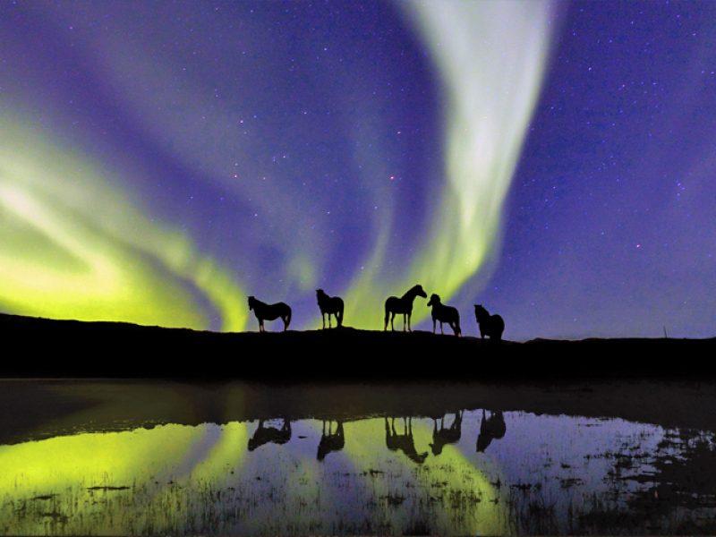 icelandic horses northern lights