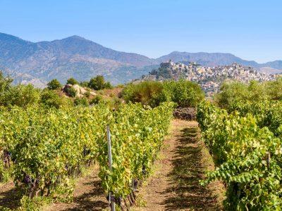 italy sicily vineyard