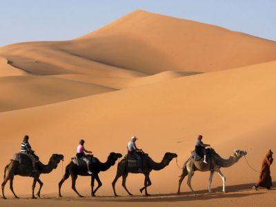 morocco camel train sahara2 istock