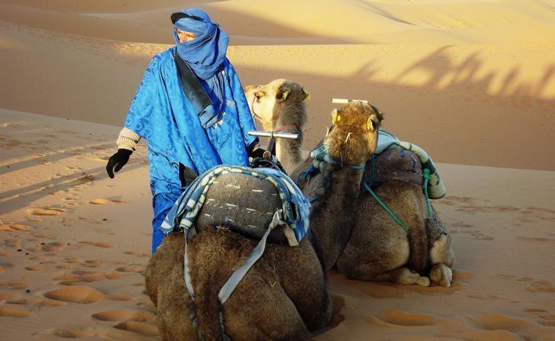 morocco camels sahara dtw