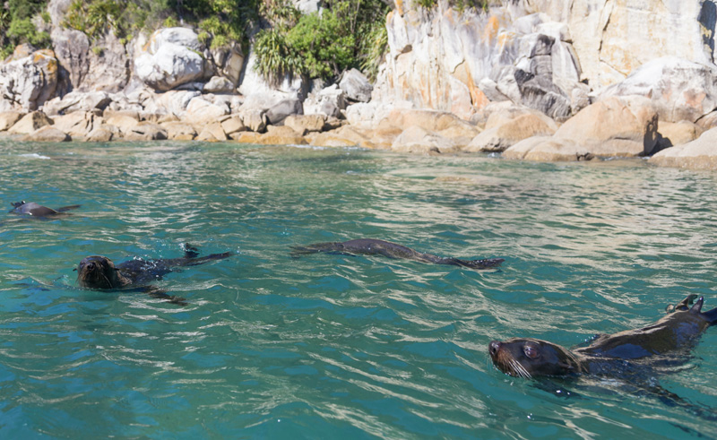 new zealand abel tasman seals istk