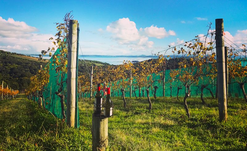 new zealand auckland waiheke island mudbrick vineyard vines