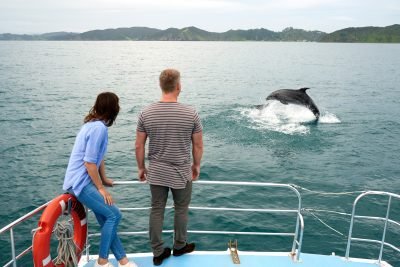 new zealand bay of islands dolphin watching boat cruise tnz