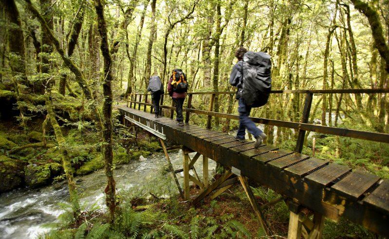 new zealand fiordland kepler track hiking over footbridge df