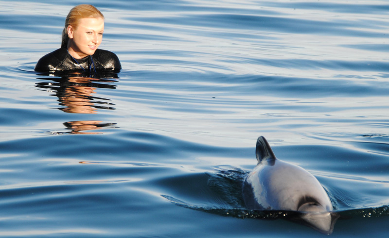 new zealand swim with dolphins akaroa bcg